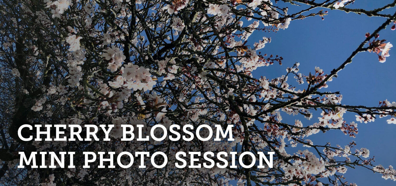 Cherry Blossom Mini Photo Sessions 2021
